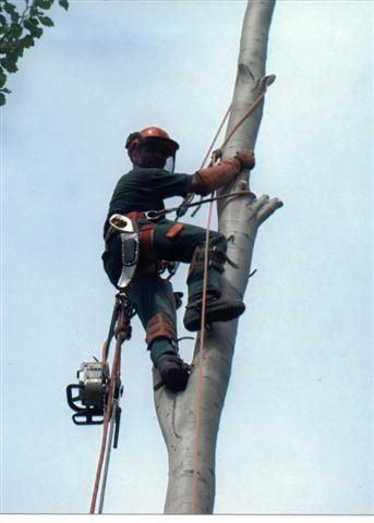 011-trabajos-verticales-sima